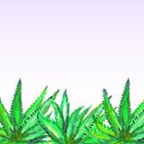 Illustration av vattenfärg målade aloeväxter Royaltyfri Bild