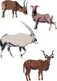 Illustration avec des chèvres Photo libre de droits