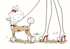 Illustration avec le chien de caniche de charme Images libres de droits