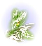 Illustration avec le laurier illustration de vecteur