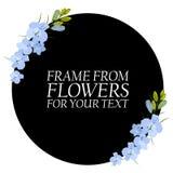 Illustration avec les fleurs bleu-clair, delphinium Avec un cercle noir illustration stock