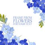 Illustration avec les fleurs bleu-clair et bleues, delphinium d'isolement illustration stock