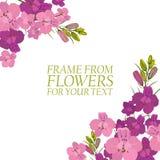 Illustration avec les fleurs cramoisies et roses, delphinium d'isolement Photos libres de droits