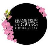 Illustration avec les fleurs rose-clair, delphinium Avec un cercle noir Photographie stock libre de droits