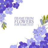 Illustration avec les fleurs violettes, delphinium illustration stock