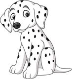 Baby dalmatian dog breed Stock Image