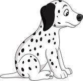 Baby dalmatian dog breed Royalty Free Stock Image