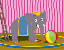 Circus elephant. Illustration of a baby elephant with ball Stock Photos