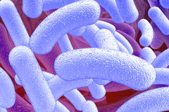 Illustration of bacillus microorganisms Stock Image