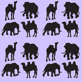 Illustration background with camels and elephants. Seamless pattern. Stock Image