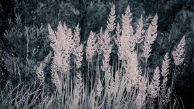 Illustration background texture concept: tall grass in the morning light, faded colors Stock Images