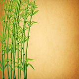 illustration of bamboo branches Stock Image