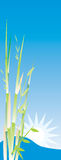 Illustration of Bamboo tree. Banner with illustration of Bamboo tree Stock Photography