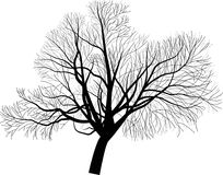 Isolated large bare tree illustration Stock Images