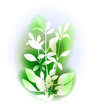 Illustration With Basil Bunch Stock Photos