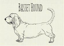 Illustration basset hound on notebook sheet. Vector illustration basset hound on notebook sheet Stock Photos