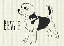 Illustration beagle on notebook sheet beagle on notebook sheet. Vector illustration beagle on notebook sheet Stock Photos