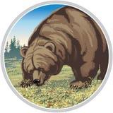 Illustration of a bear Royalty Free Stock Photo