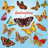 illustration of beautiful butterflies set of spring Stock Image