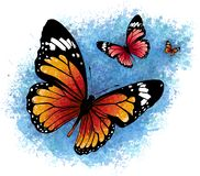 Illustration of a beautiful colorful butterfly that flies royalty free stock image