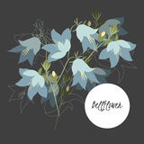 Illustration with beautiful flowers bellflower. Stock Photography