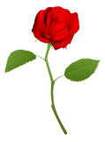 Illustration of a beautiful red rose Stock Photo