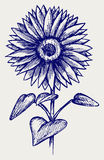 Illustration beautiful sunflower Royalty Free Stock Photos