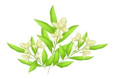 An Illustration of Beautiful Ylang Ylang Flowers Royalty Free Stock Photos