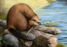 Illustration of beaver sitting on a log Stock Photo