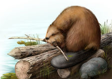 Illustration of beaver sitting on a log Stock Photography