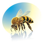 Illustration of bee Stock Images