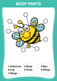 Illustration of bee vocabulary part of body. Write the correct numbers of body parts.vector Stock Images