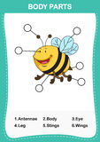 Illustration of bee vocabulary part of body. Write the correct numbers of body parts.vector Stock Image