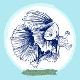 Illustration of Betta splendens, Siamese fighting fish. Freehand sketch illustration of Betta splendens, Siamese fighting fish doodle hand drawn Royalty Free Stock Photos