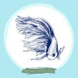 Illustration of Betta splendens, Siamese fighting fish. Freehand sketch illustration of Betta splendens, Siamese fighting fish doodle hand drawn Stock Photos