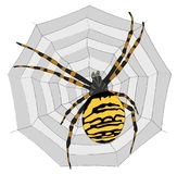 Illustration - Big spider on the  web Stock Photography
