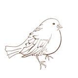 Illustration of bird Stock Image
