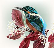 Illustration with bird and branch with flowers. Vector illustration with bird and branch with flowers Stock Photo