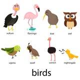 Illustration of bird cartoon Stock Photography