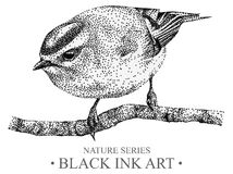 Illustration with bird goldcrest drawn by hand with black ink