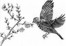 Illustration bird. On paper ,sketch Stock Photos