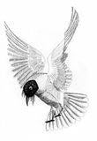 Illustration bird sea gull. On paper royalty free illustration