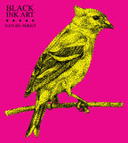 Illustration with bird Siskin drawn by hand with black ink Royalty Free Stock Photo