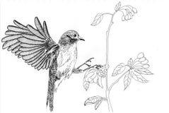 Illustration bird. Sketch, on paper Royalty Free Stock Photos