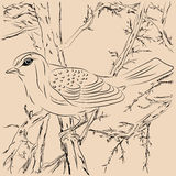 Illustration of birds in the forest. Royalty Free Stock Image
