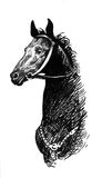 Illustration of black ink hand drawn horse Royalty Free Stock Images