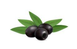 Illustration of black olives on white background.  Vector Illustration