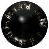 Illustration of black stripped eye iris, light reflection in dark lentil plant Stock Photos