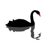 Illustration of black swan. Swimming Royalty Free Stock Images