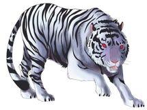Illustration blanche de tigre à l'arrière-plan d'isolement (vecteur) Image libre de droits